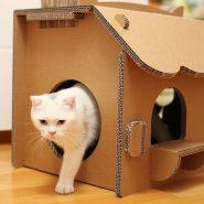 Поделки для котов своими руками из подручных средств