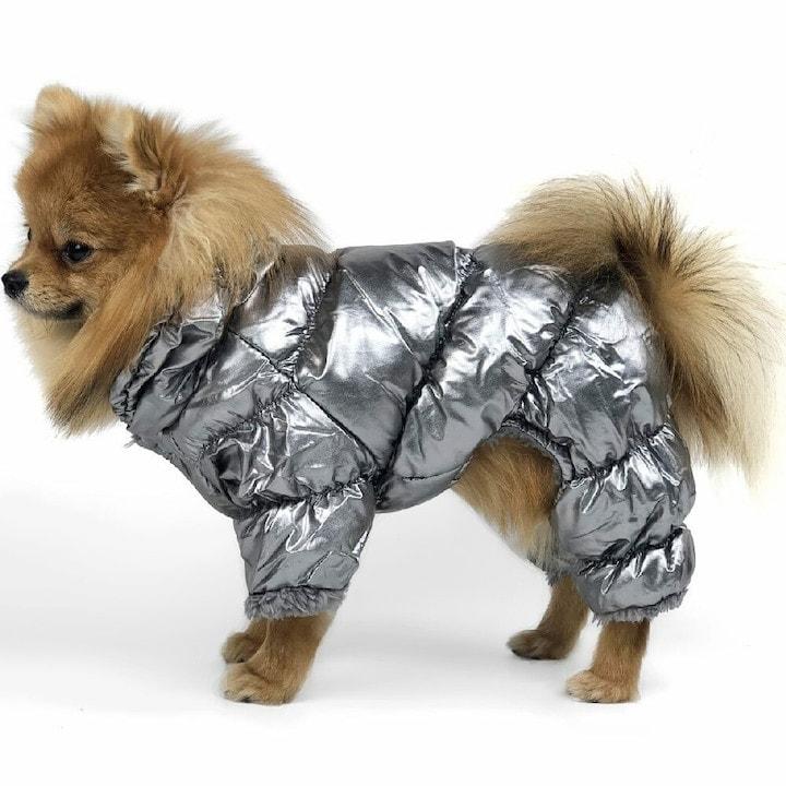 Модные наряды для кошек и собак